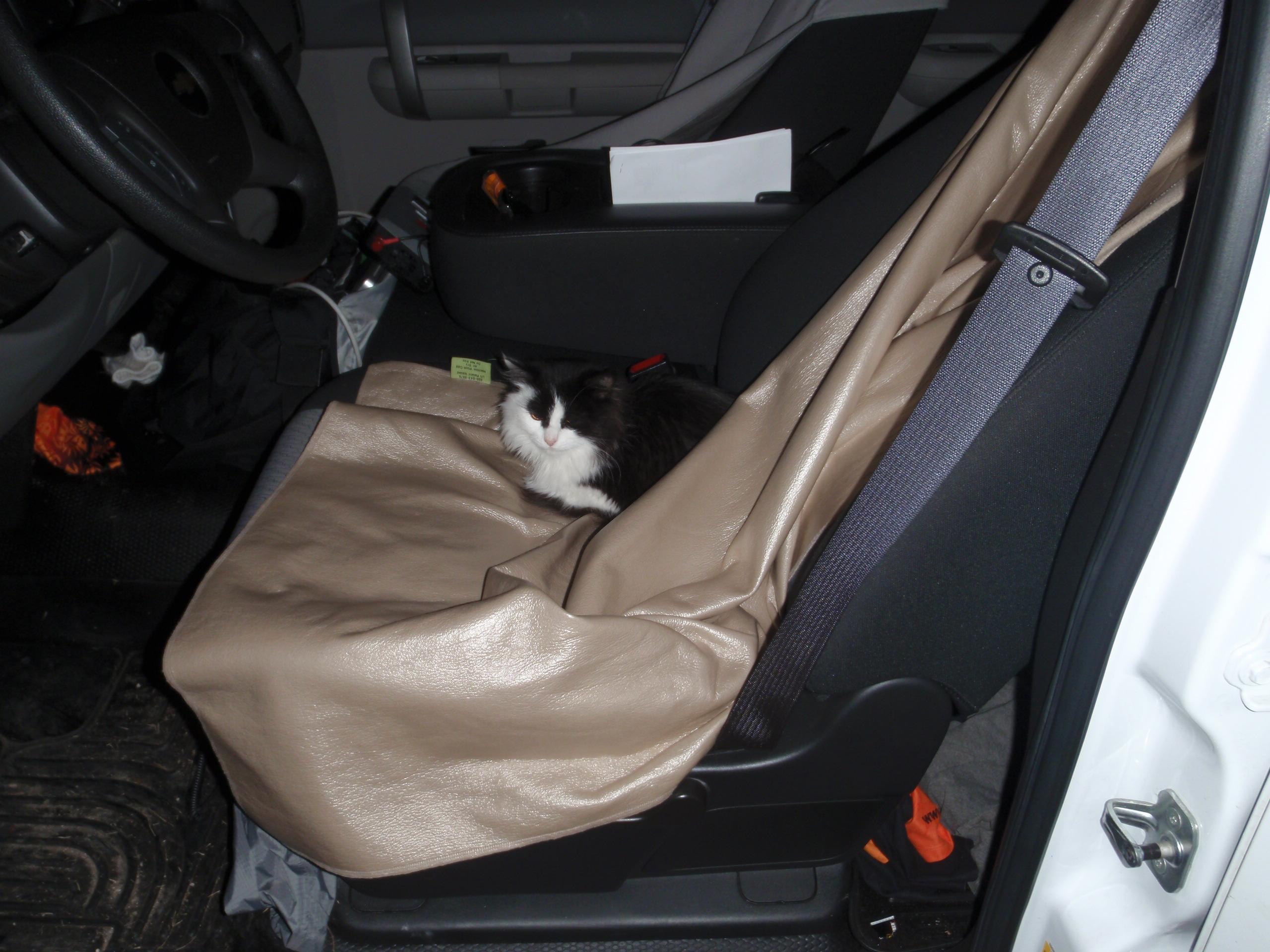 The TATUR cat, has assumed Weeble's post!